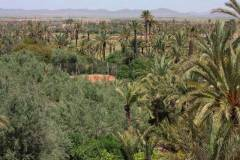 small-6-large-view-of-the-olive-grove